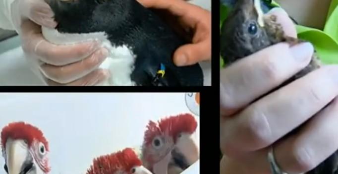 Vögel heilen, Schlangen fangen – ZDFinfo-Dokumentation über das Tiermedizinstudium in Gießen.