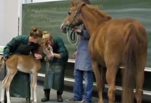 Die dreiteilige ZDFinfo-Dokumentation gibt einen guten Einblick ins Tiermedizinstudium. (Foto: © ZDFinfo/bewegtezeiten)