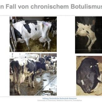 """Bilder aus Verdachtsbetrieben – was ist der Grund für den schlechten Zustand der Rinder? """"Chronischer Botulismus"""" wurde nicht nachgewiesen."""
