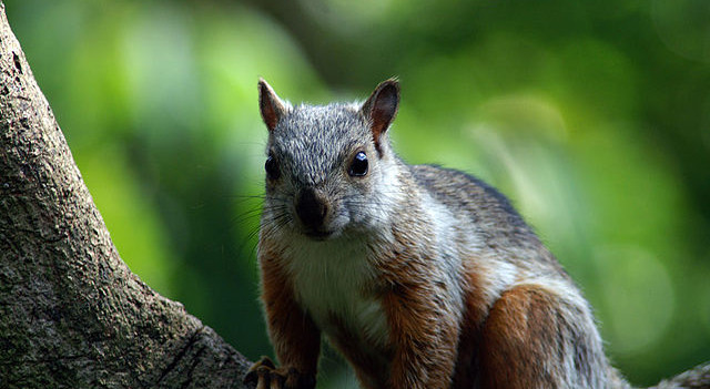 Bunthörnchen stehen im Verdacht, Träger eines neuartigen Bornavirus zu sein, das Gehirnentzündungen beim Menschen auslösen kann.