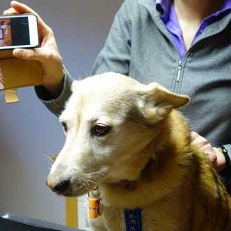 Die richtige Diagnose aus einem Handy-Video abzuleiten ist für Tierärzte nicht einfach. (Foto: ©tierundleben2014)