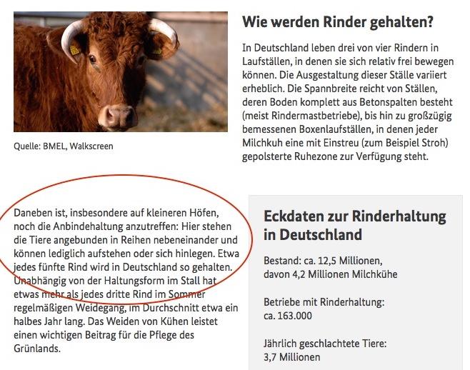Wie viele Rinder sind in Deutschland noch in den Ställen angebunden? Die Aussagen der Bundesregierung sind nicht eindeutig. (Foto: screenshot BMEL-Webseite 28.4.2015)