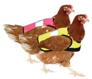 Die Zubehörindustrie hat bereits reagiert und bietet DIN-konforme-Warnwesten für Hühner an (©omletshop.de)