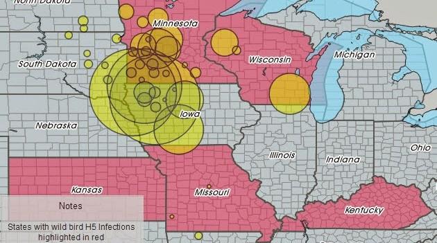Gelb markiert sind die zahlenmäßig am stärksten von H5 betroffenen Geflügelhaltungen.