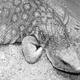 DR. HENRIK HOFMANN reptil Tierheim griesheim fettleber