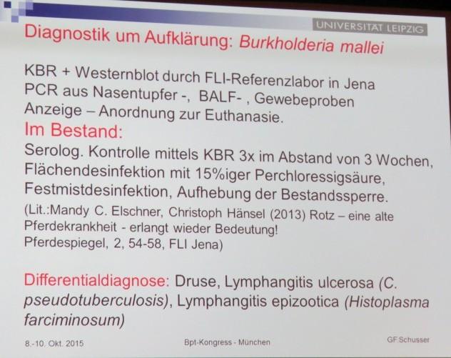 Diagnostische Möglichkeiten bei Rotz
