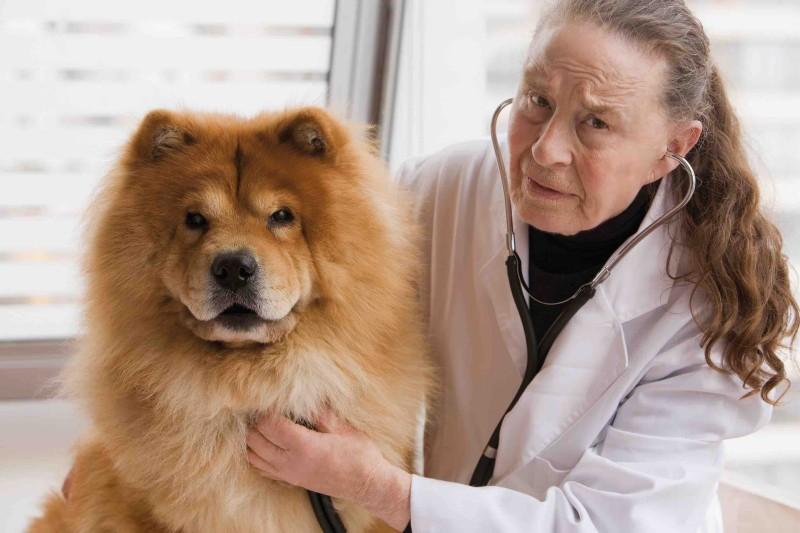 Rentenabstriche oder länger arbeiten? Wie alt dürfen Tierärzte werden, ohne sich um ihre Rente sorgen zu müssen. (Foto: ©TVD/XXXX)