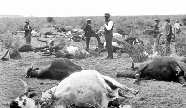 Die hohen Verluste durch Rinderpest waren im 18. Jahrhundert Anlass für die Gründung der ersten tierärztlichen Ausbildungsstätten. (Foto: © wikipedia/gemeinfrei)