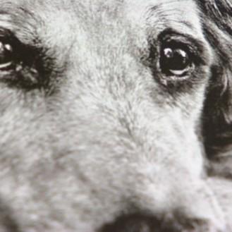 Euthanasie – ein Problemthema für Tierhalter und Tierärzte. (Foto: ©screenshot WDR-Filmbeitrag)