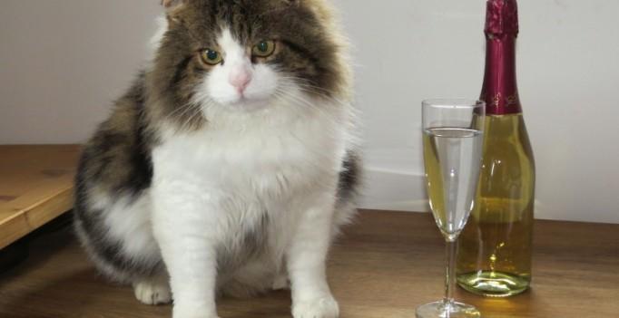 Was bringt 2016? Kommt die Kastrationspflicht für freilaufende Kater, darf man als Katze schon mal etwas betreten aufs neue Jahr schauen. (Foto: © WiSiTiA/aw)
