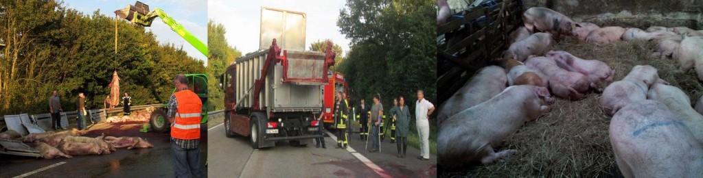 A45 Unfall Schweinetransporter