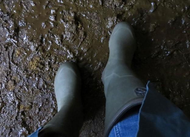 MRSA-Verschleppung vorbeugen: Betriebseigene Stiefel und Kittel sind wichtiger Bestandteil der Hygiene. Gilt besonders für Tierärzte. (Foto: ©WiSiTiA/aw)