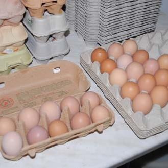 Ansehen kann man Eiern eine Salmonellenbelastung nicht. (Foto: © WiSiTiA/hh)