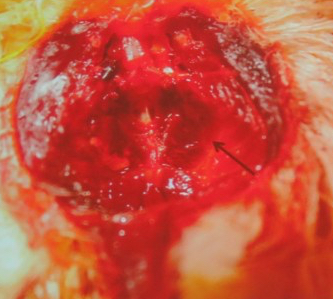 Pathologie Teflonvergiftung beim Kanarienvogel. (© Ausschnitt Folie Dr. Norbert Kummerfeld, Klinik für Zier- und Wildvögel, TiHo)
