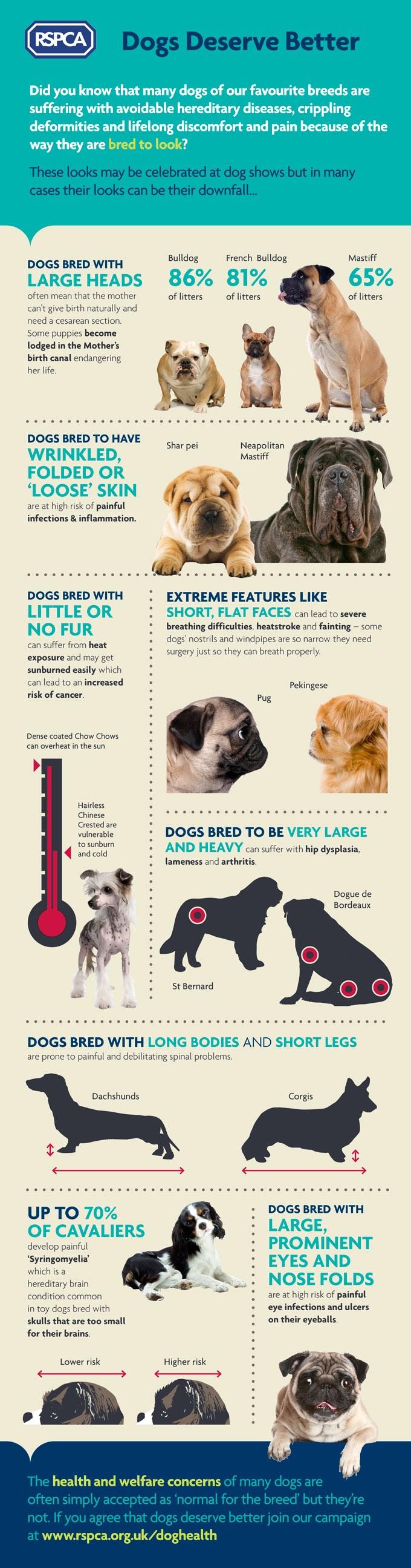 Hunde verdienen besseres: Infografik zu Qualzuchtmerkmalen des englischen Tierschutzverbandes RSPCA. (Grafik: © RSPCA)