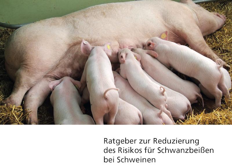 """Titelseite """"Ratgeber Schwanzbeissen"""" Niedersachsen. (Foto: © Landwirtschaftsministerium Niedersachsen/Fotolia-anoli)"""