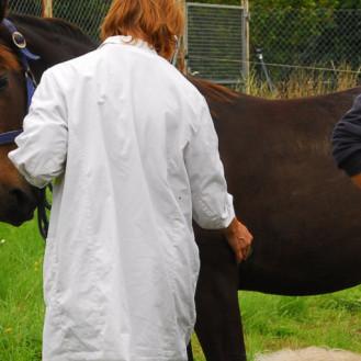 Schutzimpfungen sind für Pferde unangenehm – bei Tetanus könnte man Impfintervalle verlängern, sagt StIKo Vet. (Foto: © WiSiTiA/Henrik Hofmann)