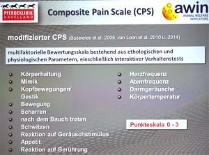 Composite Pain Scale