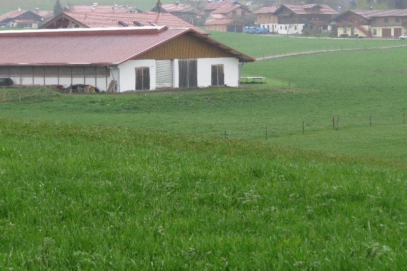 Laufstall mit angrenzender Weide