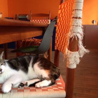 Zerstörte Möbel als Grund für die Amputation von Katzenkrallen? In den USA ja, in Deutschland verboten. (Foto: ©WiSiTiA/Helen Arnolds)