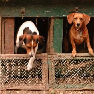 """Wohin mit Hund, Katze & Co. im Urlaub? Tipps zur """"Prüfung"""" der Qualität von Tierpensionen. (Foto: © WiSiTiA/Henrik Hofmann)"""