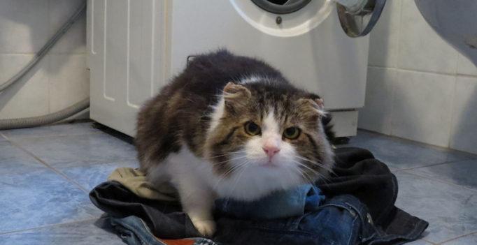 Kleidung auf Wäscheberg vor Waschmaschine