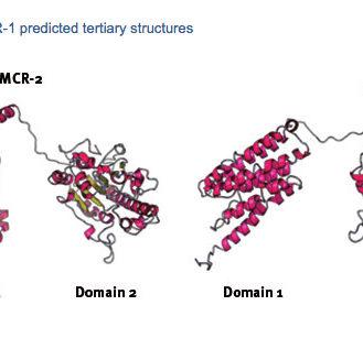 Zeichnung Struktur der mcr-Gene: