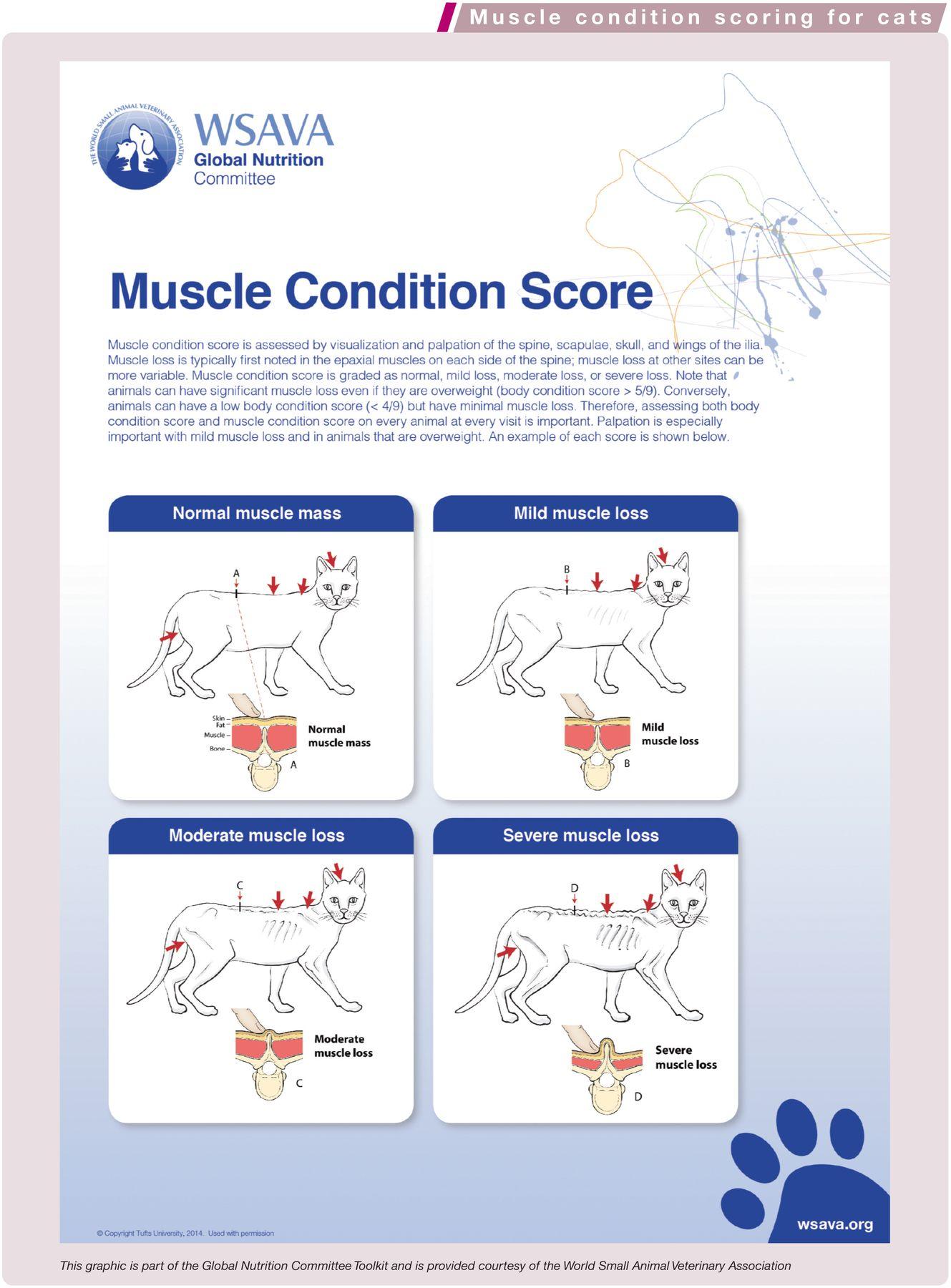 Muscle_Score_large_WSAVA