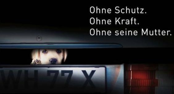 """Kampagnenmotiv """"illegaler Welpenhandel"""" Deutscher Tierschutzbund"""