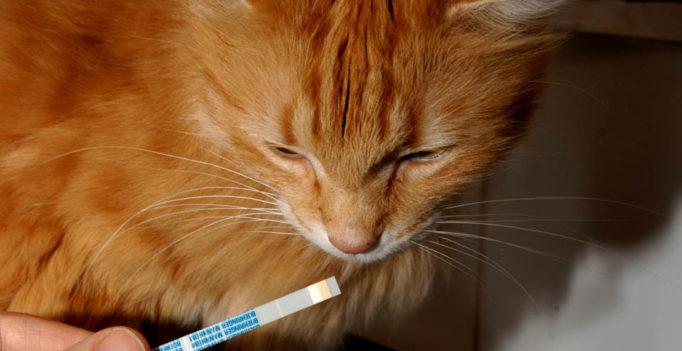 Teststreifen zur Blutzuckerbestimmung zu Hause