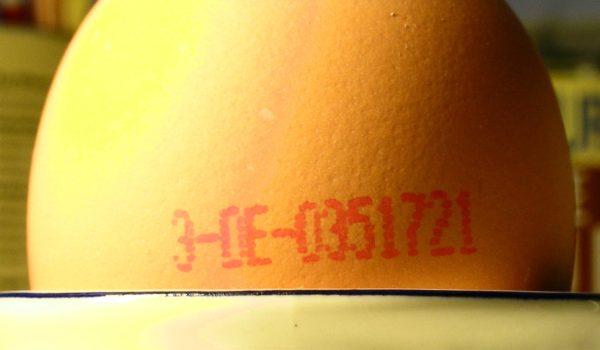 Kein Vorbild: Die Eierkennzeichnung kennt auch ein Negativ-Merkmal, das Käfigei. Das soll es für Fleisch nicht geben. (Foto: © GNU free documentation license)