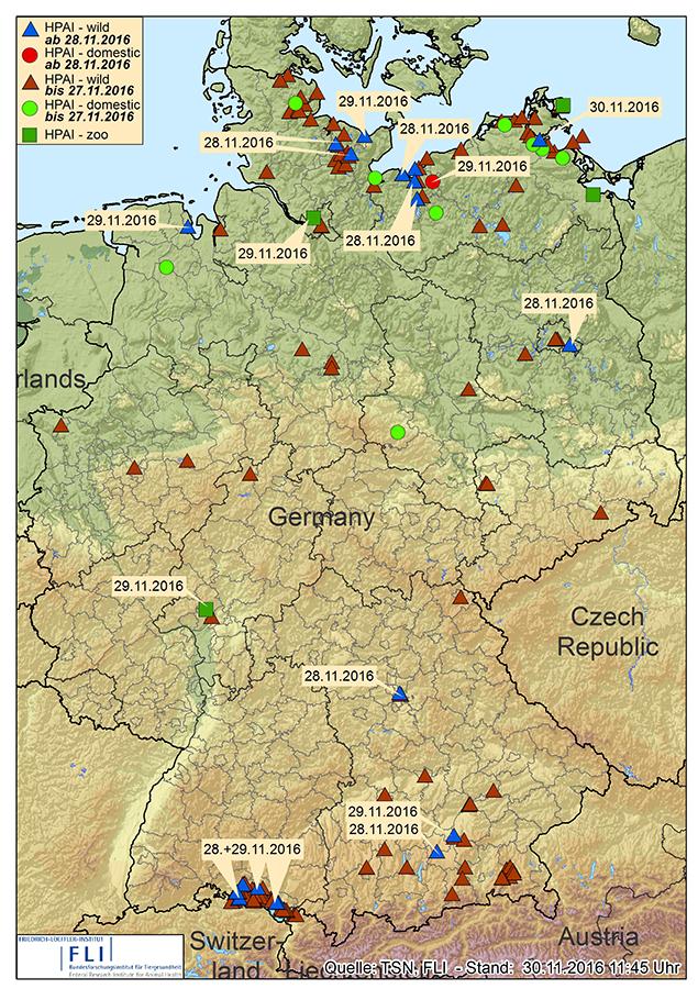 Den Ursprung nahm der aktuelle H5N8-Ausbruch in Norddeutschland und im Bodenseeraum. Jetzt werden immer mehr Fälle aus der Fläche gemeldet (Karte: © FLI / Stand: 30.11.2016)
