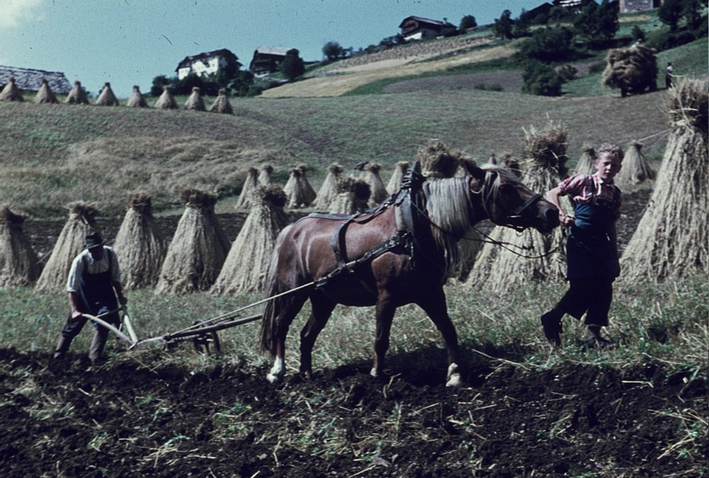 """Arbeitstiere sind weitestgehend abgeschafft – Dank Technik, nicht dank Teirrechtsbewegungen ala """"PRO ARBEITSTIER"""". (Pferd in steilem Gelände um 1960 – Foto: © Wikipedia/common licence)"""
