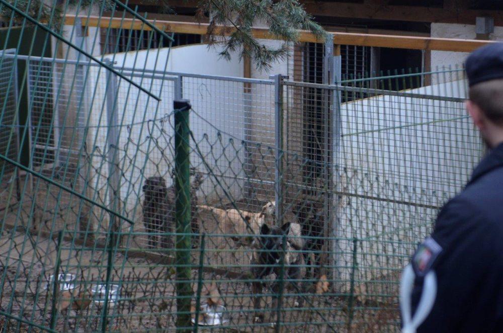 60 Polizisten durchsuchten das Grundstück der Hundehändler in Kreuztal. (Foto: © B. Baumöller/Vier Pfoten)