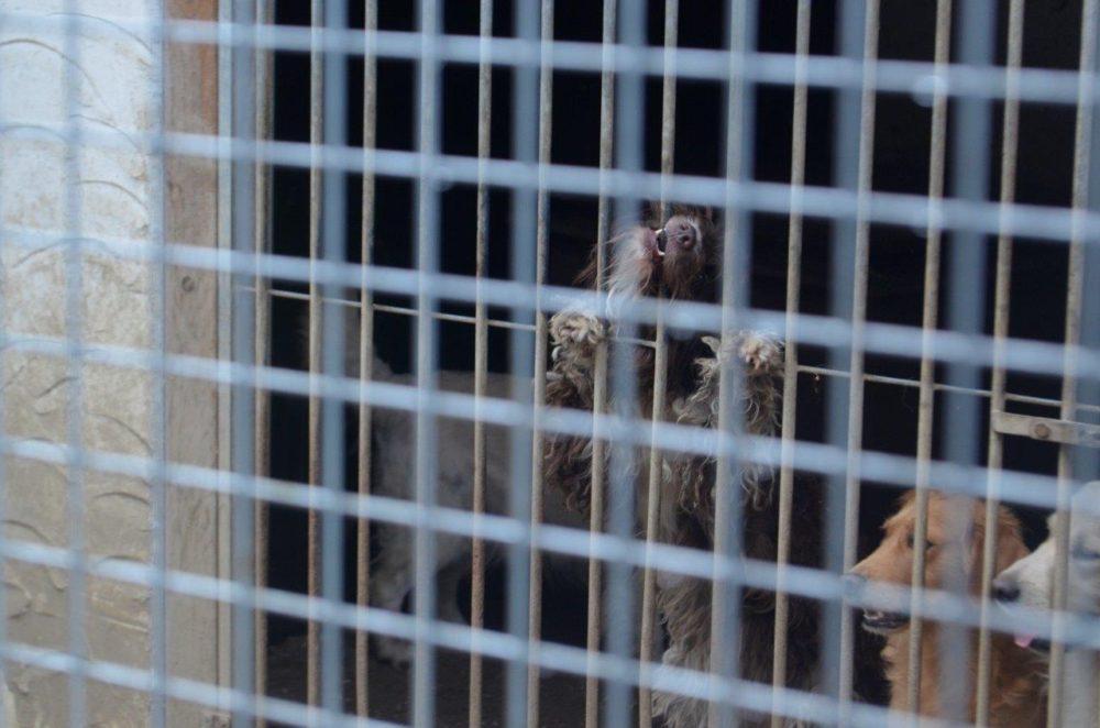 108 Hunde holten die Beamten aus der Zwingeranlage die für 30 Tiere ausgelegt war. (Foto: © B. Baumöller/VierPfoten)