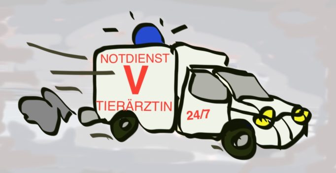 Tierärztlicher Notdienst 24/7 oder gibt es Alternativen?
