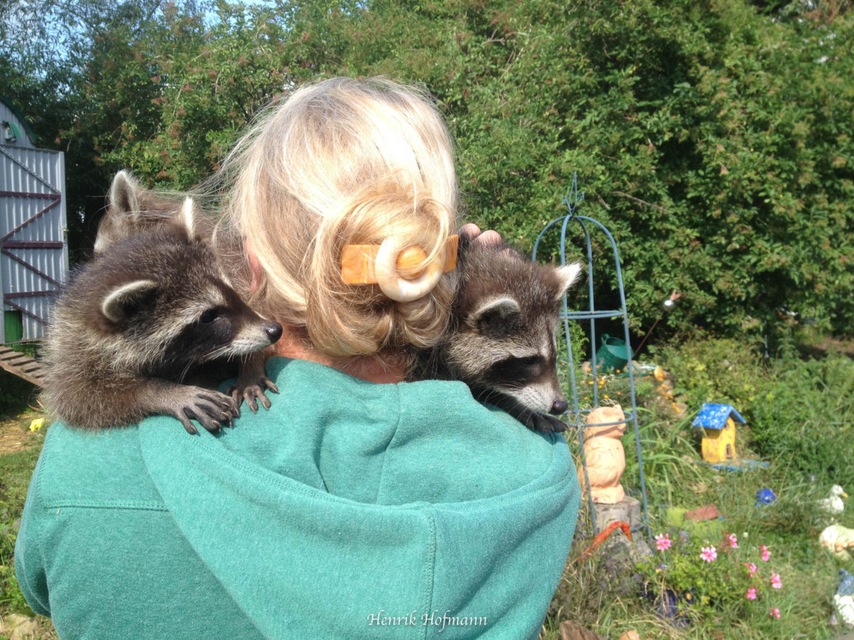 Tierheime sind bereit, investive Arten aufzunehmen.