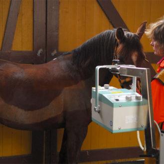 """Die """"schulnotenähnlichen Röntgenklassen"""" des alten Leitfadens hat sich bei der Pferdebeurteilung zu sehr auf die Röntgenbefunde verlagert. Dabei sollte stets die klinische Untersuchung der wichtigste Teil der Beurteilung eines Pferdes sein. Eine Aufwertung der klinischen Untersuchung durch den Tierarzt. Und Schutz vor Abwertung des Pferdes. (Bild: Henrik Hofmann)"""