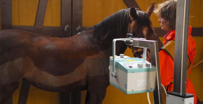 Neuer Röntgen-Leitfaden Pferd: Schluß mit den Schulnoten - wir-sind ...