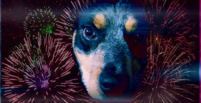 bachblüten angst hund