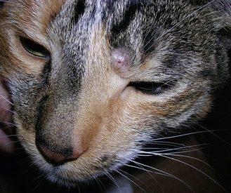 Zehn Anzeichen Für Krebs Bei Hund Und Katze Wir Sind Tierarztde