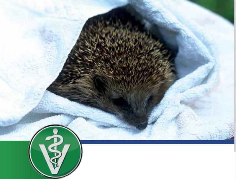 "Cover des Buches ""Igel in der Tierarztpraxis"""
