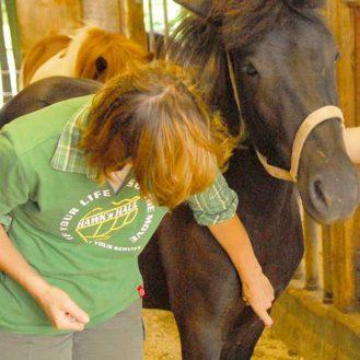 Die Ständige Impfkommission rät, zukünftig Pferde in ganz Deutschland gegen das West-Nil-Virus zu impfen. erste Infektionen gab es i (Bild: Henrik Hofmann)