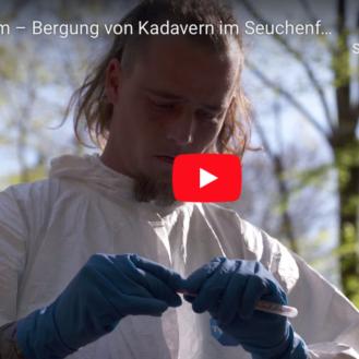 Schweinepest: Lehrfilm zum Bergen von Kadavern im Wald