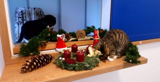 Katzen, die die Weihnachtsdekoration oder die giftige Christrose gefressen haben und Hunde, die nach dem Festtages- resteessen unter Erbrechen, Durchfall oder Knochenkot leiden - in den Weihnachtsfeiertagen sind dies typische Notfälle in den Tierarztpraxen und tierärztlichen Kliniken. Foto: Hildebrand