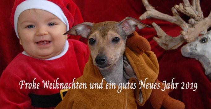 Frohe Weihnachten und ein gutes Neues Jahr wünscht das Team von wir-sind-tierarzt.de (Bild: (c)2018 Dr. Henrik Hofmann)