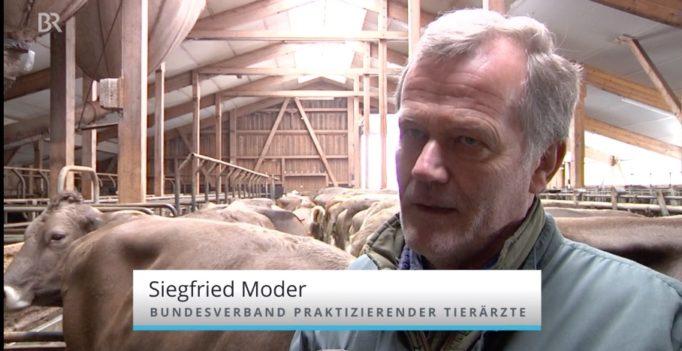Tierärztemangel: Im Kuhstall, da stinkt\'s - wir-sind-tierarzt.de