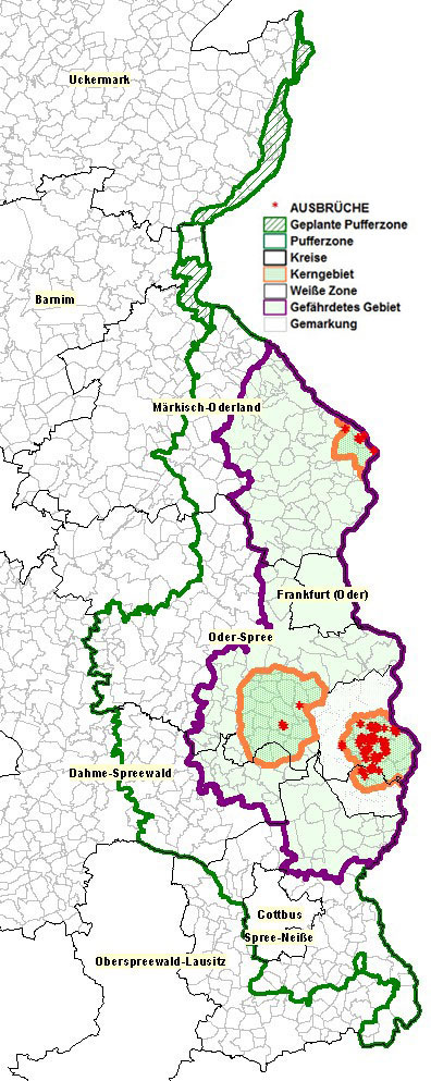 Karte der ASP-Gesamtlage in Brandenburg (6.11.2020)