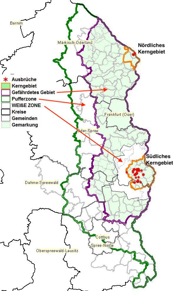 Karte des ASP-Gebietes an der deutsch-polnischen Grenze mit den verschiedenen Sperrzonen. (Karte: MSGIV Brandenburg)