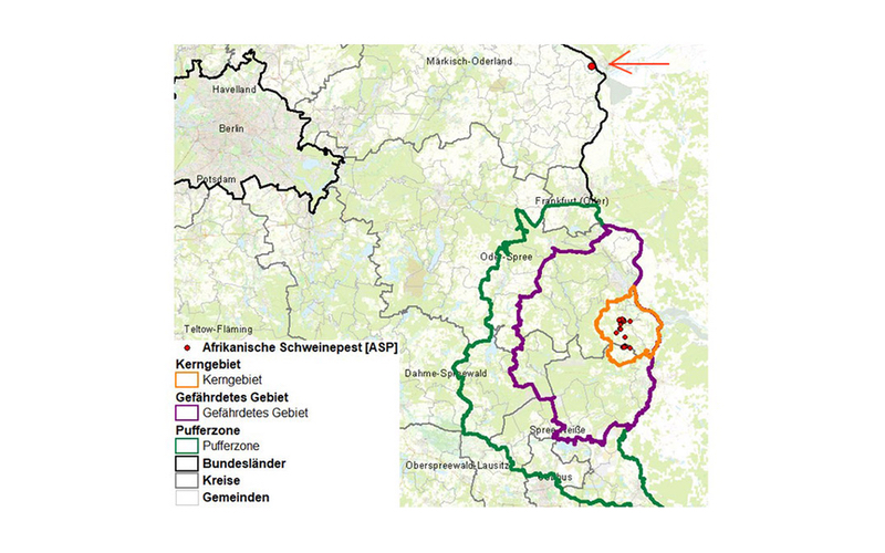 Karte: Bestätigte Fälle von Afrikanischer Schweinepest in Brandenburg / Deutschland 30.10.2020